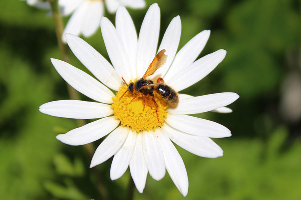 Perkembangbiakan pada Tumbuhan Secara Generatif Perkembangbiakan Tumbuhan secara Generatif, Vegetatif Alami dan Vegetatif Buatan