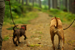 5 Things You Need to Know Before Going Hiking With Your Dog
