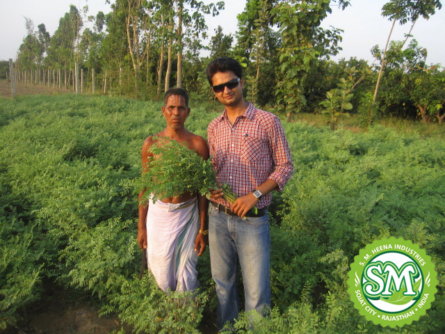 S M Heena Industries Indigo Cropping In Southern Part Of India