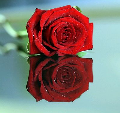 719e3b84de983 Banco de imagenes fotos gratis fotos de rosas rojas parte jpg 399x375 Fotos  de rosas rojas