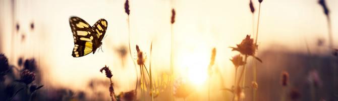 la serenità nella semplicità volontaria