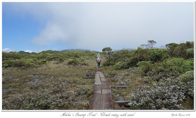 Alaka'i  Swamp Trail: Clouds rising with wind