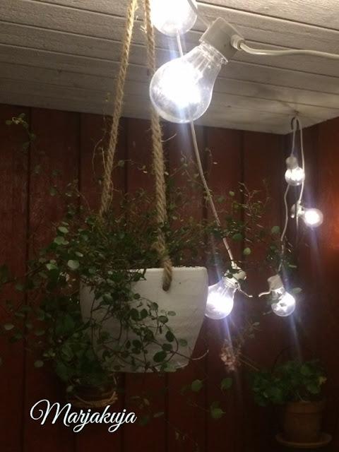 lankaköynnös amppelit ja valot
