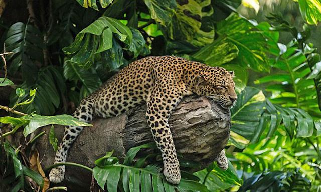 Bali Safari and Marine Park (Gianyar)