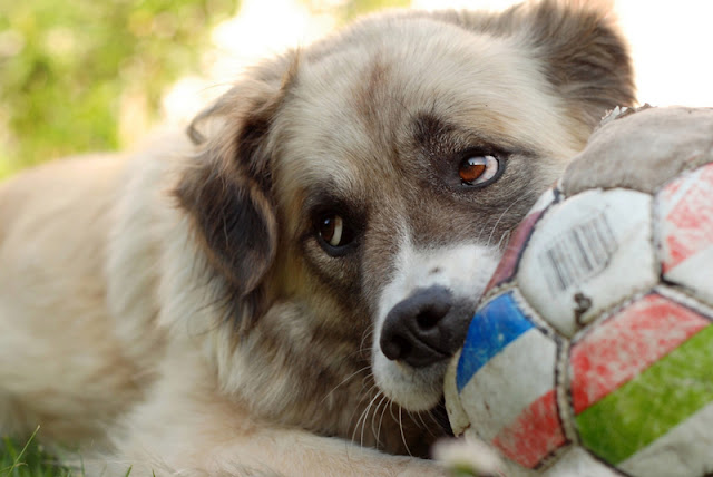 Research shows positive reinforcement dog training is better
