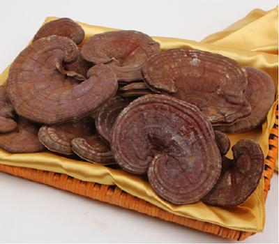 Dùng nấm linh chi nội địa hay nấm linh chi nhập khẩu hiệu quả cao