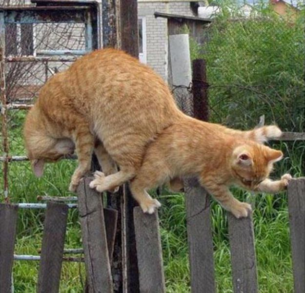 Funny Cool Pictures Two Cats One Fence