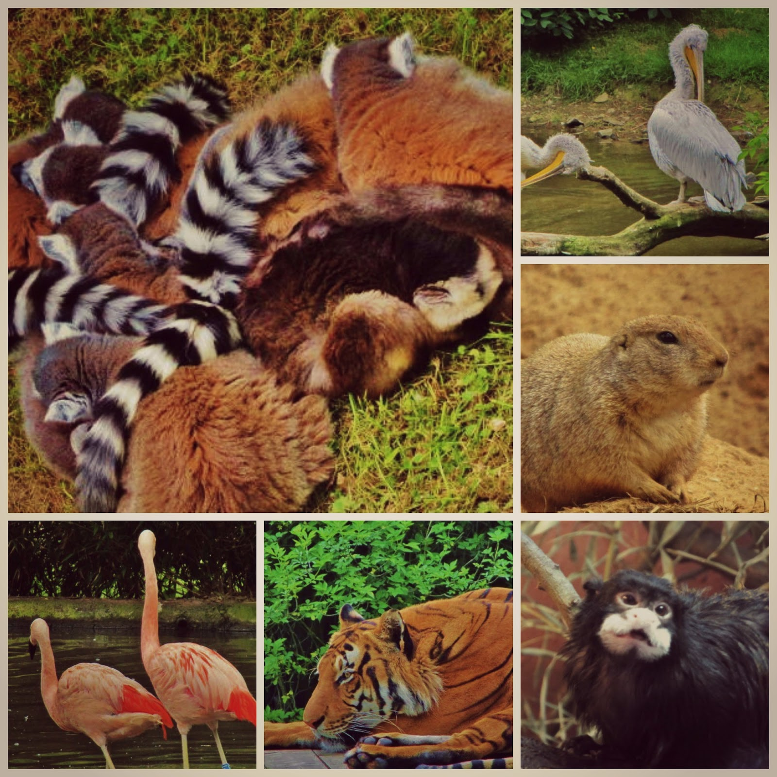 Prahan Eläintarha