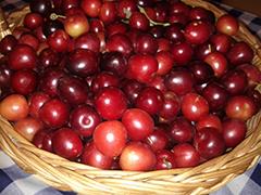 Satireggiando ottobre 2016 for Mapo frutto