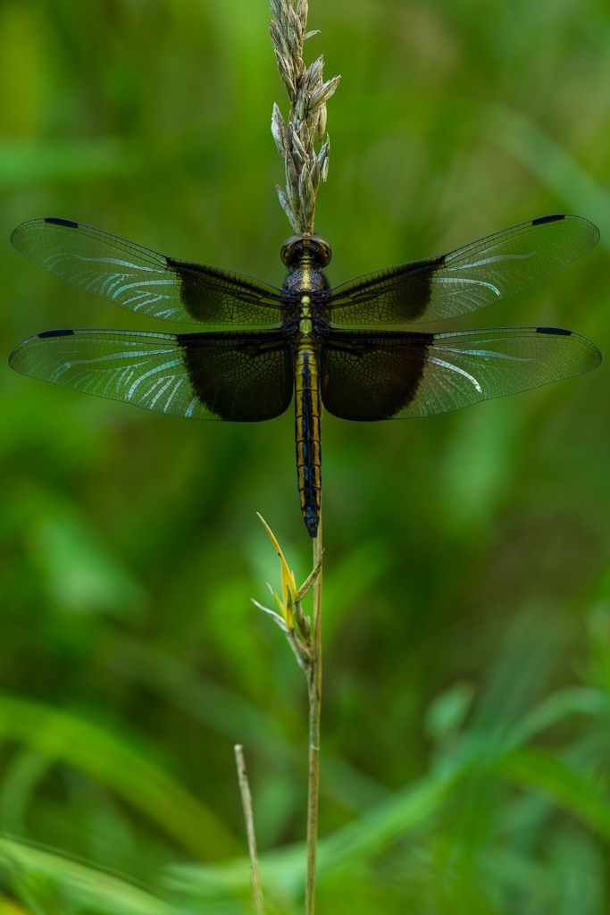 Of the grandest and most beautiful images of insects ...