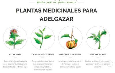 Bajar de peso con plantas medicinales