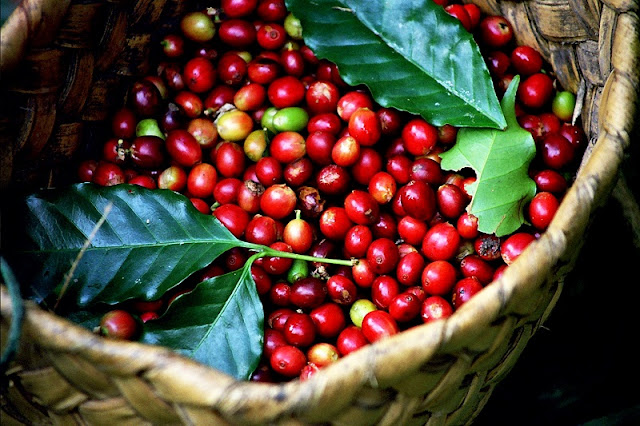 Explore The Coffee Capital Of Vietnam