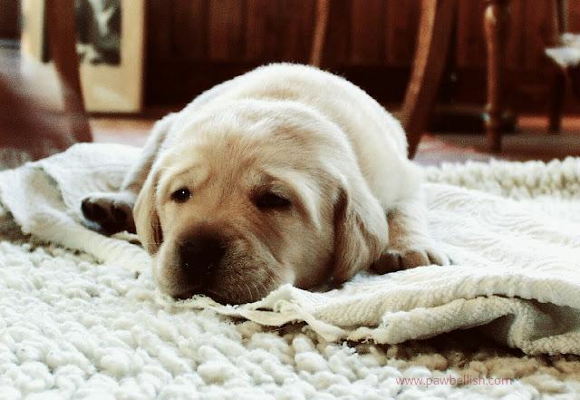 Dog sleeping on a washable throw rug