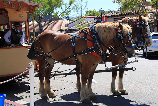 Belgian Draft Horses and the horse-drawn trolley, Solvang