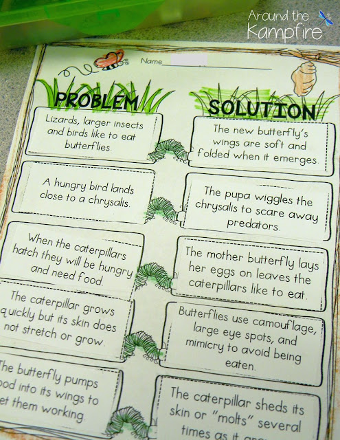 Butterfly life cycle problem/solution