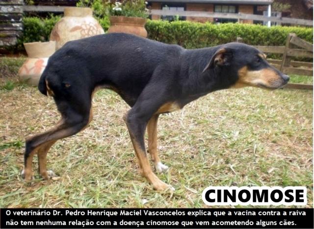 """Nota técnica da Secretaria da Saúde avisa que """"Cinomose"""" é a doença viral contagiosa que vem atacando cães em Cariré,CE"""