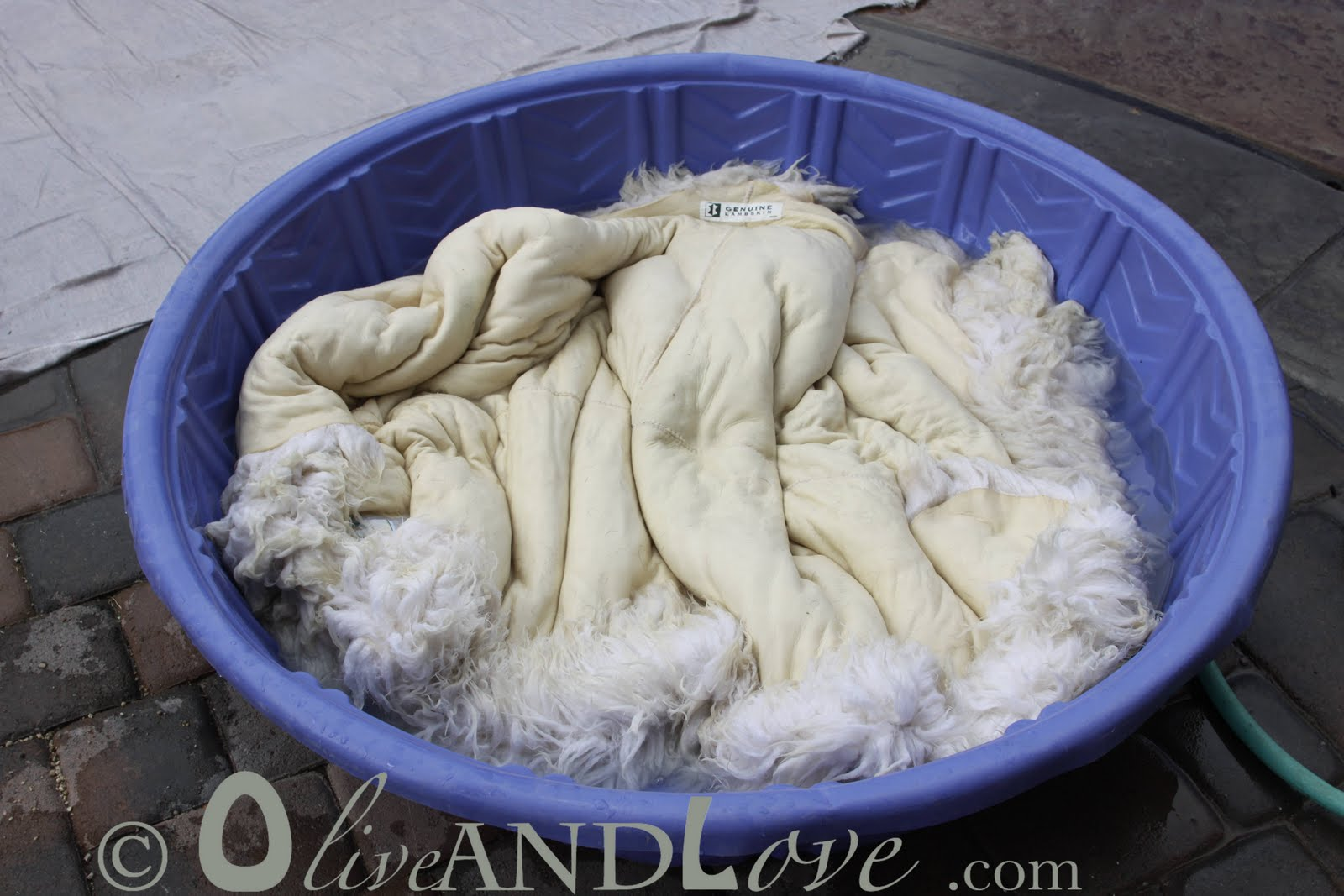 Olive And Love Washing A Sheepskin Rug