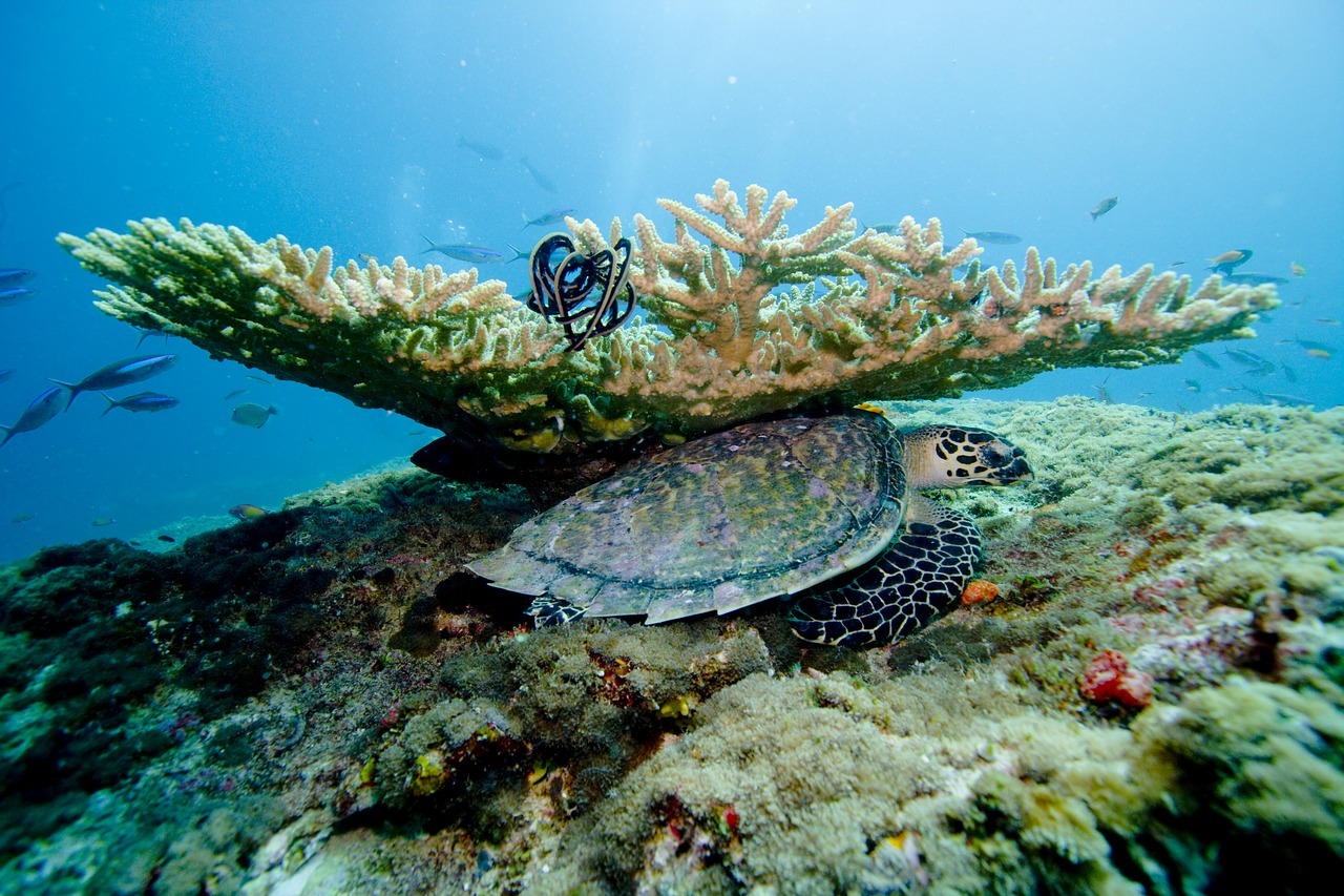 Scuba Diving Coral Reefs in Maldives