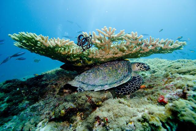 Scuba Diving Coral Reefs in Maldives