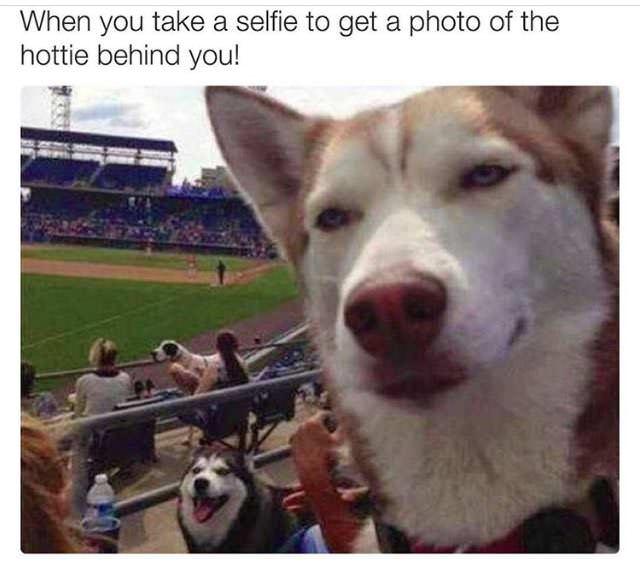 Silly Bunt: Hottie Dog Selfie Meme