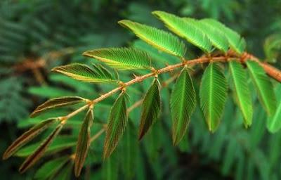 Soal dan Jawaban Bab Sistem Gerak Tumbuhan (Pilgan)