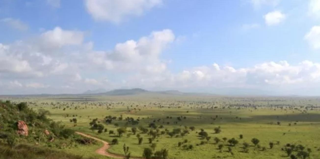 sahara, steppe, savana