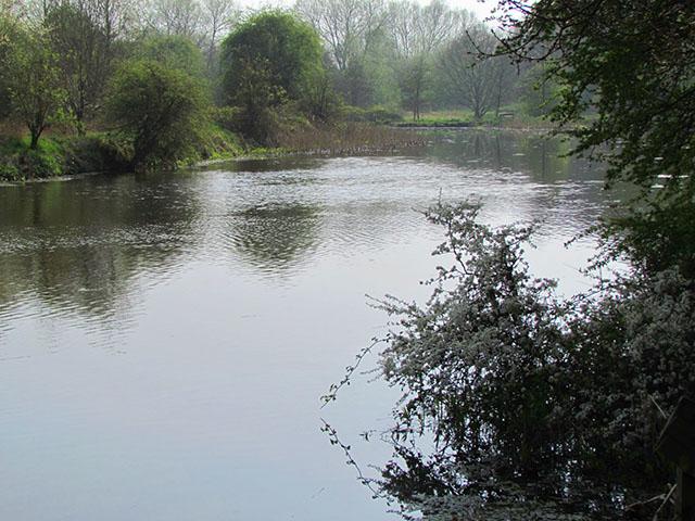 Spring River Weaver