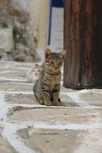le bonheur des chats de paros une ile en grece