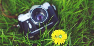 jiji-types-of-camera-grass