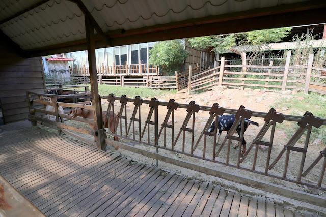 羊世界牧場