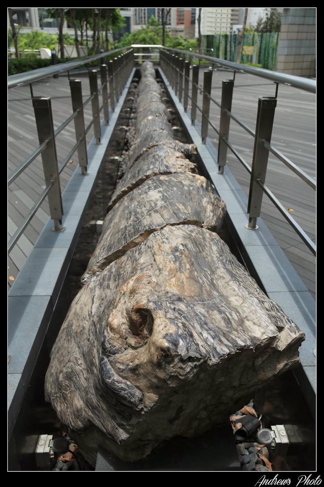 Andrew's Blog: 如心化石公園