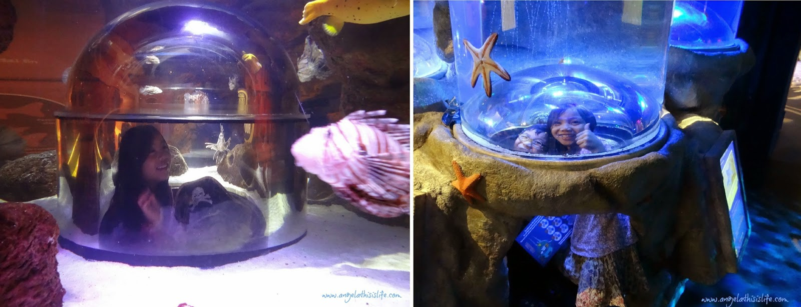Sea Life Manchester half term, The Octonauts at Sea life, Family Half Term Day Out
