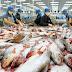 Thực hư tin đồn EU cấm nhập cá Việt Nam vì nghi có chứa chất thủy ngân