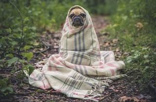 Pengalaman Berhadapan Dengan Anjing Pemburu, Anjing Liar dan Anjing Rumahan