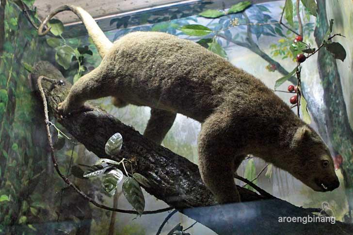 kuskus museum zoologi bogor