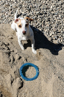Thelma by the stone pile with her toy