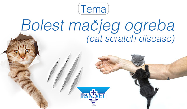 Bolest mačjeg ogreba Cat scratch disease - Panvet Subotica