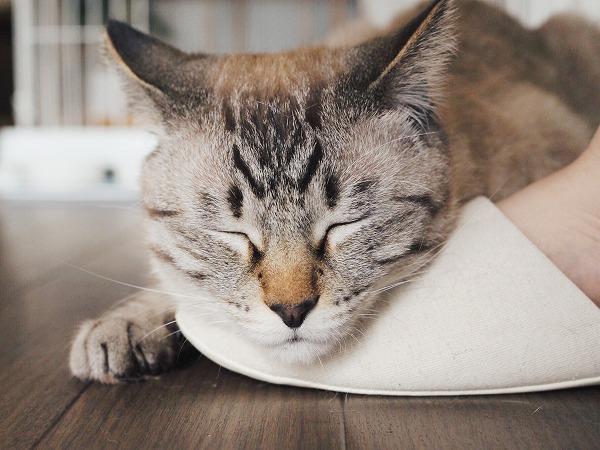 スリッパの上に顔を乗せて眠たそうにしてる