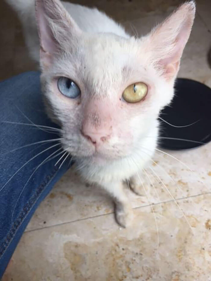 Homeless Cat Opened His Beautiful Eyes For The First Time In Months. His Transformation Is Incredible!