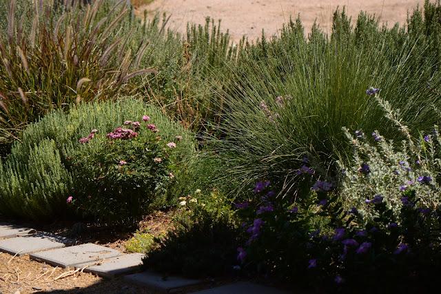 tuesday view, small sunny garden, amy myers, desert garden