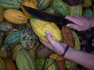 Pemecahan buah kakao