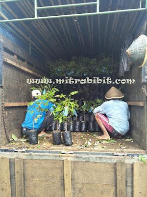 www.mitrabibit.com