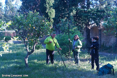 Col·locació d'una xarxa entre arbres fruiters