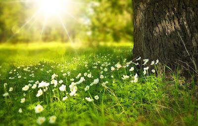 spring_disease