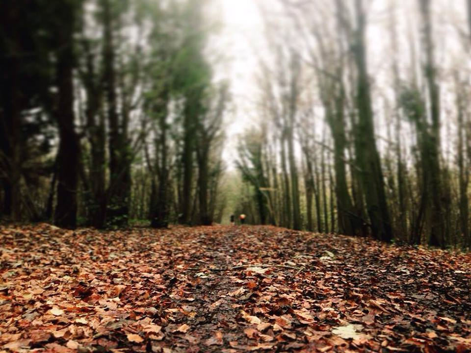 FitBits | Stanmer Woods trail running Brighton