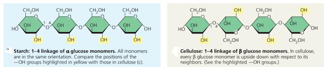 perbedaan tepung dan selulosa, Struktur tepung (starch), Struktur selulosa, perbedaan struktur tepung (starch) dan selulosa