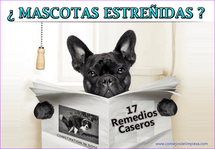 Curar las mascotas estrenidas consejos de limpieza for Trata catarro 7 remedios caseros curar catarro comun