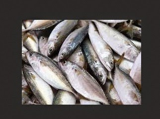ikan kembung segar dan masih fresh