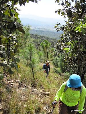 Zona reforestada después de un incendio hace varios años en el Cerro San Miguel