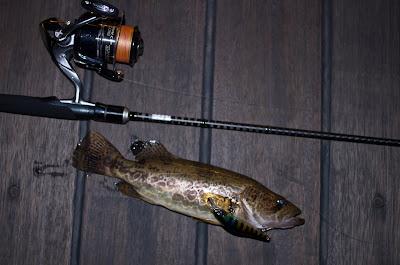 Ауха or Mandarin fish на Usami Datsu 80SP